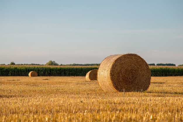 Balle di fieno di paesaggio rurale dopo la raccolta nel campo vicino alla piantagione di mais