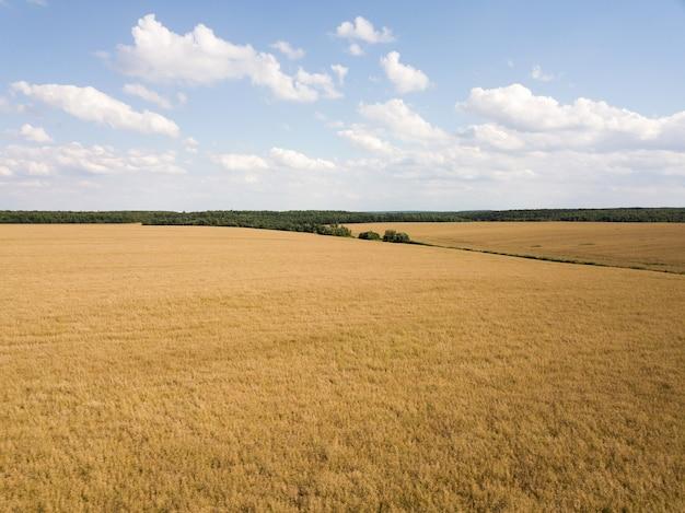 Paesaggio rurale con un campo di colza matura