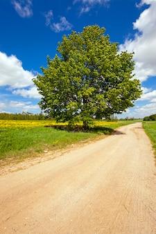 Strada rurale - strada rurale non asfaltata lungo la quale cresce l'albero