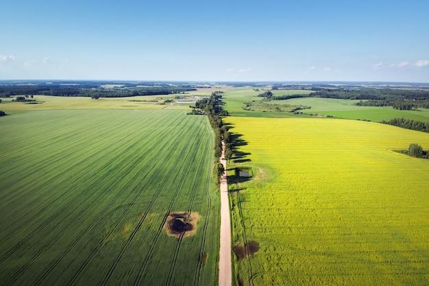 Strada rurale con vicolo dell'albero e campo di colza in fiore giallo