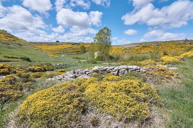 Scena rurale in primavera con campi di fiori gialli