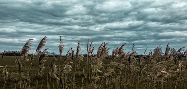 Vegetazione rurale sotto un cielo nuvoloso in primavera