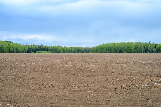 Paesaggio piatto estivo rustico. terreno arato in un campo, un bosco misto di conifere e latifoglie e un cielo azzurro con nuvole
