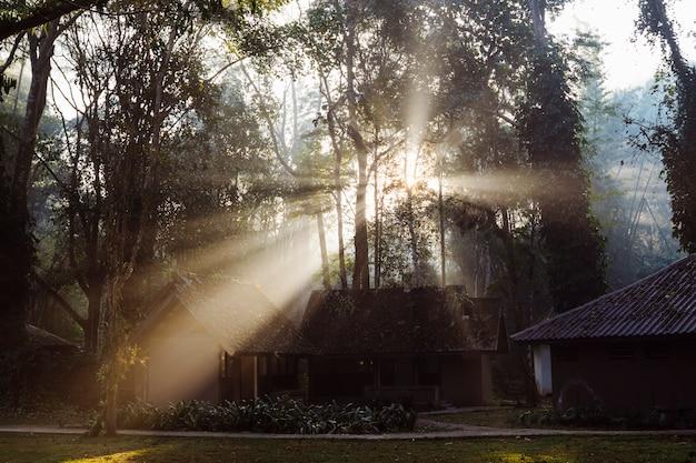 Casa di legno rustica nella foresta. parco nazionale in thailandia con bungalow da campeggio. splendida luce del mattino tra alberi ad alto fusto. natura, trekking e turismo in asia.