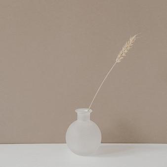 Gambo dell'orecchio di segale o grano in vaso in piedi sul tavolo bianco contro il fondo beige pastello neutro della parete.