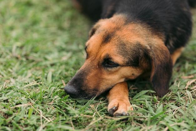 Il triste cane senzatetto nella natura
