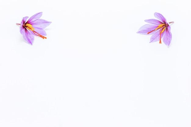 Fiore di croco di zafferano su sfondo bianco. copyspace. fiori di zafferano negli angoli superiori dell'immagine.