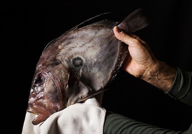 Pesce di san pietro