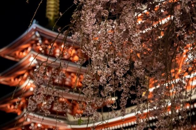 Sakura cherry blossoms al tempio di sensoji di notte ad asakusa