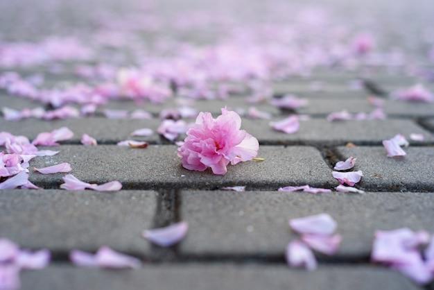 Petali di fiori di sakura sul selciato.
