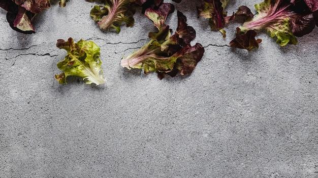 Foglie di insalata copia spazio