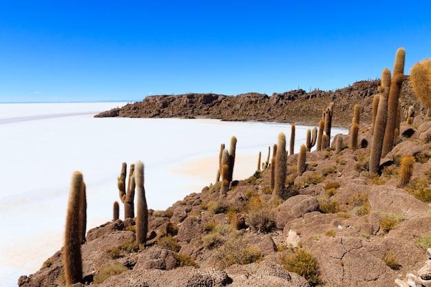 Salar de uyuni vista dall'isola di incahuasi, bolivia. la più grande distesa di sale del mondo. paesaggio boliviano