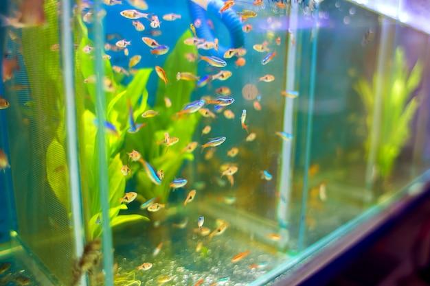 Vendita di piccoli pesci aquari nel negozio di animali domestici