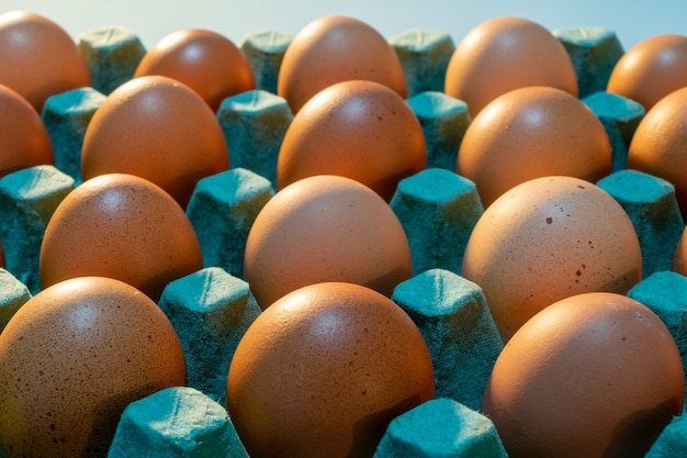 Vendita di uova di gallina ruspante