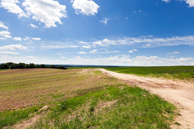 Strada coperta di sabbia per il trasporto, costruita attraverso un campo agricolo, cielo blu sullo sfondo, l'erba cresce sul terreno a lato della strada