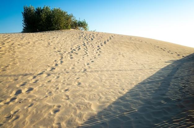 Colline di sabbia sulla spiaggia sullo sfondo di cespugli verdi.