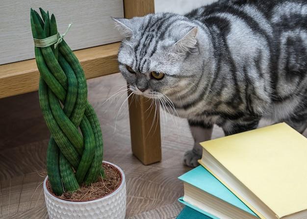 La sansevieria è cilindrica a forma di codino, libri e gatto.