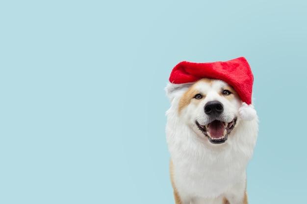 Costume da cane di babbo natale che celebra il natale.