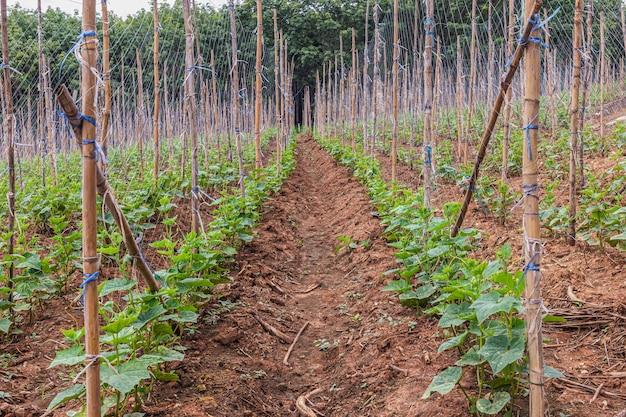 Un alberello di colture da campo