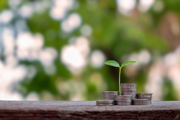 L'alberello che cresce su una pila di monete ha uno sfondo verde sfocato naturale