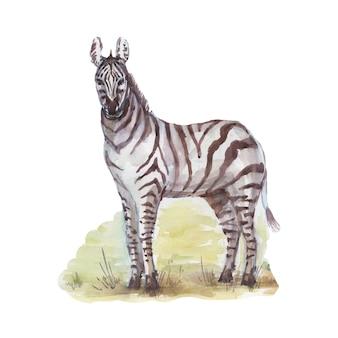 Savannah africa zebra giraffa safari animali acquerello disegnato a mano