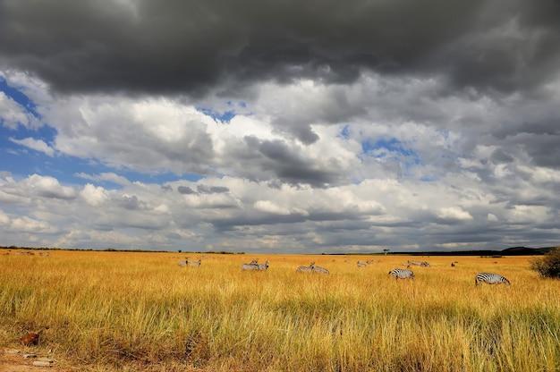 Paesaggio della savana nel parco nazionale del kenya, africa