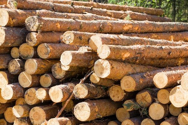 Grandi tronchi segati e accatastati