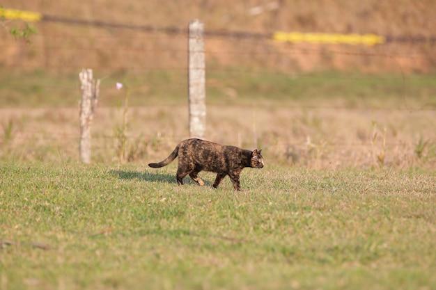 Il gatto squamoso ha un mantello di colore nero e arancione, quindi può anche essere conosciuto come il gatto tartaruga