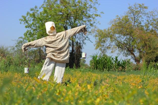 Spaventapasseri in azienda agricola, india
