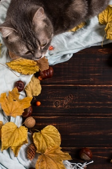 Sciarpa, castagne, noci e foglie secche e un gatto su un tavolo di legno. priorità bassa di riscaldamento di autunno, copyspace.