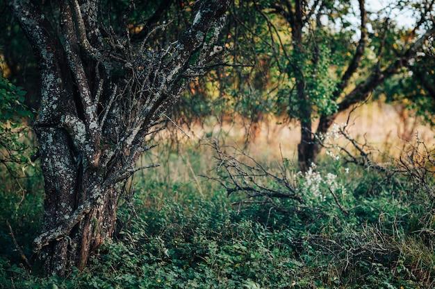 Spaventoso, caotico, giardino con vecchi licheni e rami secchi a terra