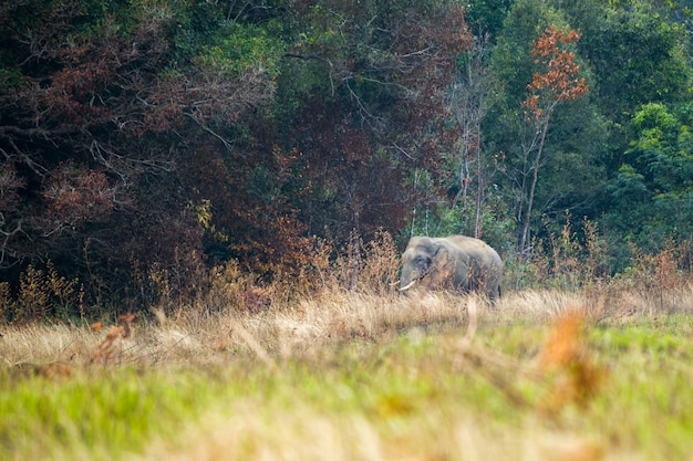 Scena di elefanti a khao yai national park, thailandia