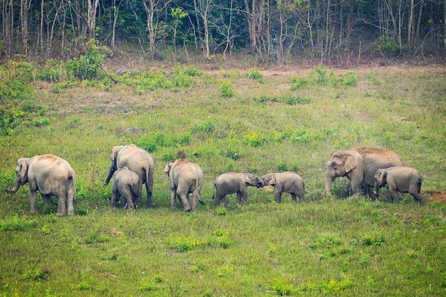 Scena della famiglia di elefanti al parco nazionale di khao yai