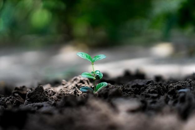 Scena con una bella pianta