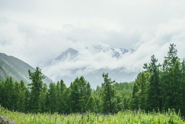 Paesaggio alpino scenico con radura erbosa vicino al bordo della foresta contro la grande montagna innevata in nuvole basse. prato con erbe e fiori vicino al bordo della foresta contro grandi montagne innevate in nuvole basse.