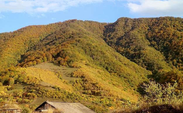 Fogliame autunnale panoramico sul fianco della montagna con cielo azzurro soleggiato