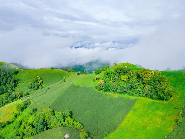 Paesaggio panoramico del campo agricolo con nebbia sulla collina in thailandia.