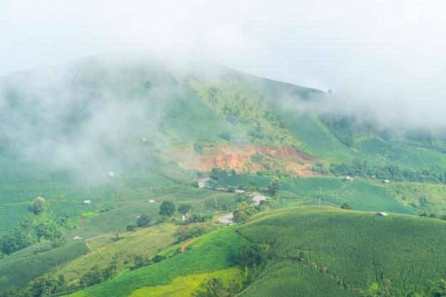 Paesaggio panoramico del campo agricolo con nebbia sulla collina in thailandia
