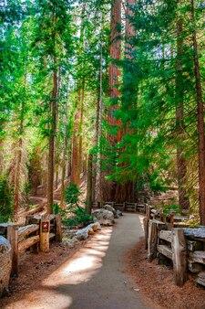 Paesaggio panoramico nel parco nazionale di sequoia usa