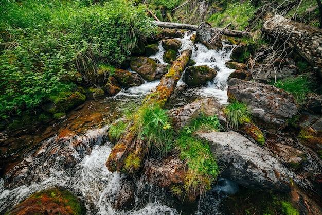 Paesaggio scenico alla bellissima flora selvaggia sul piccolo fiume nei boschi sul fianco della montagna. tronchi di alberi caduti di muschio e massi con muschi in acqua di sorgente limpida. scenario della foresta a cascate nel torrente di montagna.