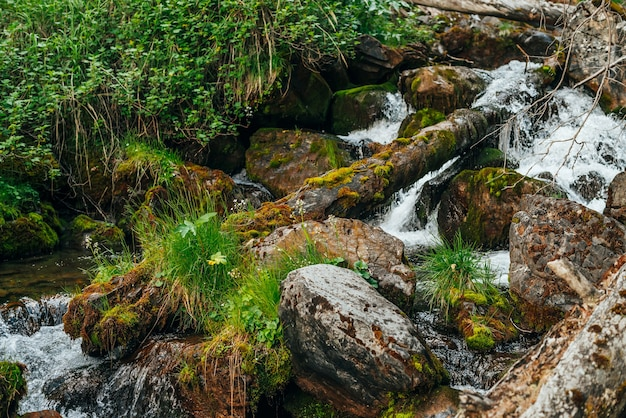 Paesaggio scenico alla bellissima flora selvaggia sul piccolo fiume nei boschi sul fianco della montagna
