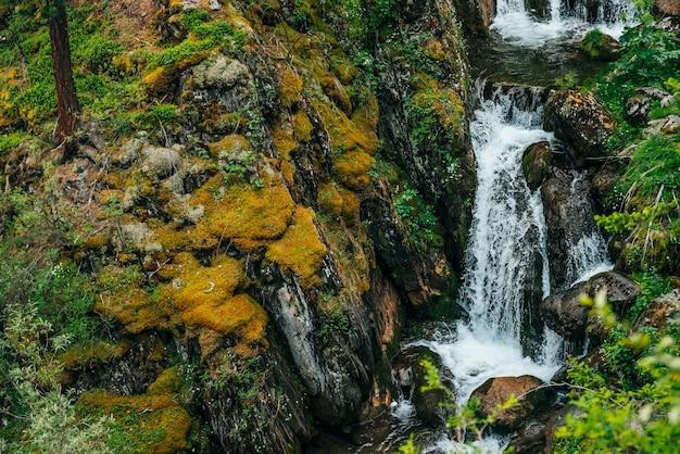 Paesaggio panoramico con bella cascata nella foresta tra una ricca vegetazione