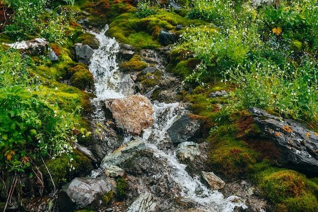 Paesaggio panoramico con acqua sorgiva limpida tra muschio denso e vegetazione lussureggiante