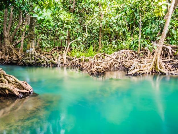 Ecosistema forestale di mangrovie con radici di mangrovia e acqua blu