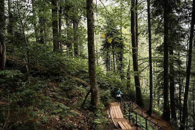 Percorso panoramico con scale in legno nella foresta verde