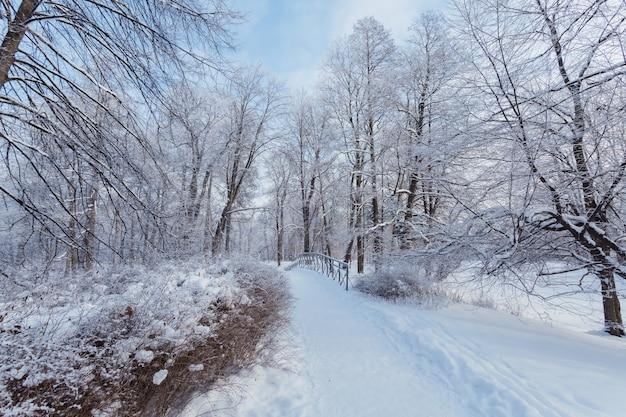 Strada panoramica con piccolo ponte tra gli alberi coperti di neve sull'isola di yelagin a san pietroburgo, russia.