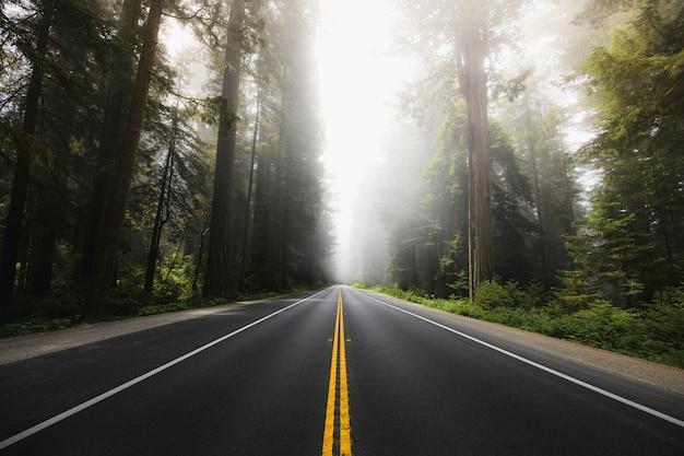 Percorso panoramico nella foresta nazionale di redwood in california, usa