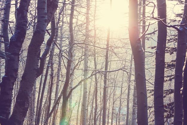 Foresta innevata scenica nella stagione invernale. buono per lo sfondo di natale.