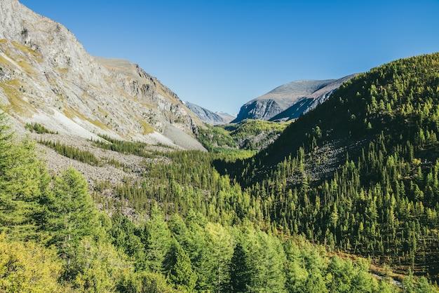 Paesaggio alpino soleggiato panoramico con valle stretta e montagne verdi con foreste di conifere di larici sotto il cielo blu. la vastità della montagna alla luce del sole. bella vista dell'altopiano verde sotto il sole.