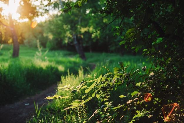 Verde naturale soleggiato scenico. riflesso lente su bellissime foglie. incredibile paesaggio mattutino della natura con raggi di sole.